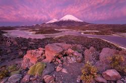 Pink eruption