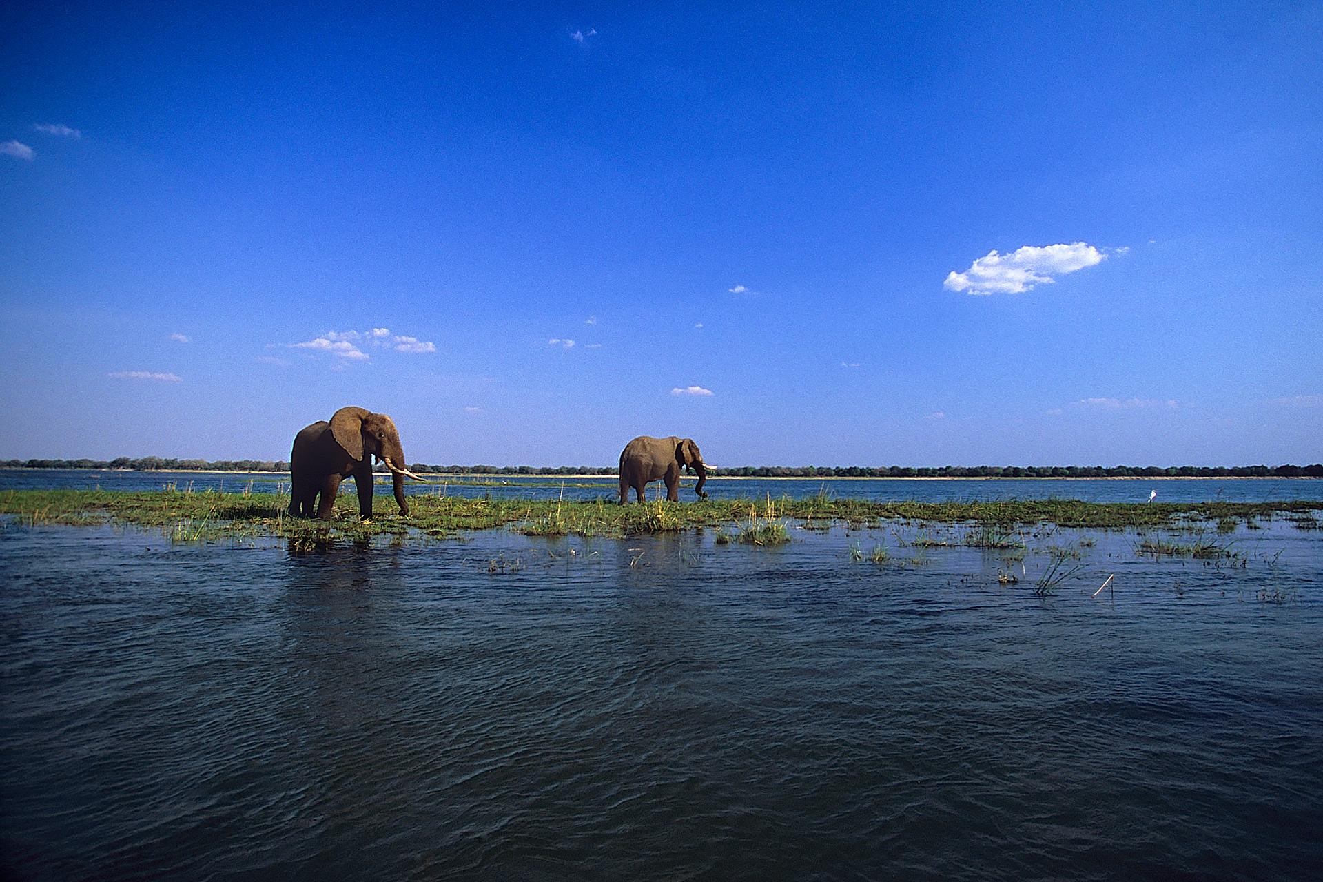 Sailing the Zambezi