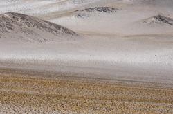 The desert alive