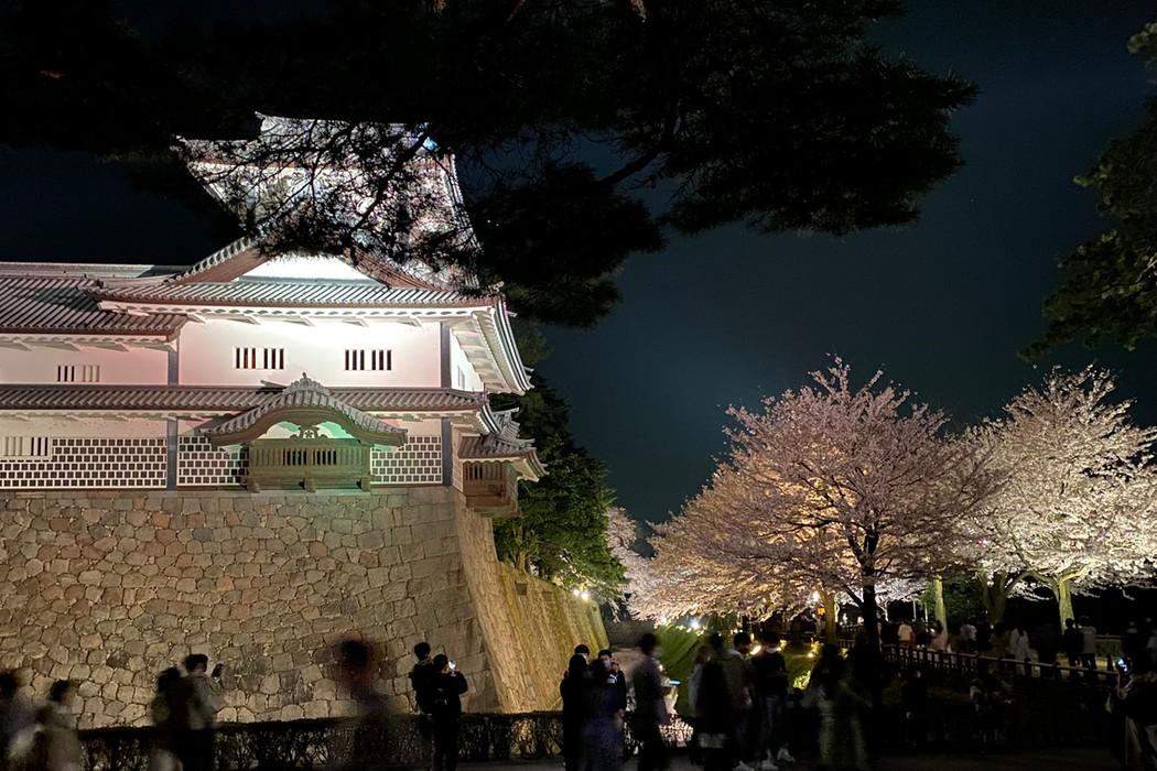 Kanazawa Castle and cherry blossoms, Kanazawa