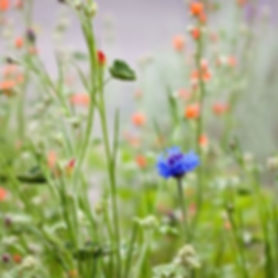 spring-landscapes-wildflowers_33685_600x