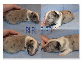 Bi Blue Boy.jpeg