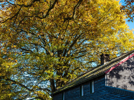 Buying and Selling in the Fall Is Different Than in Other Seasons