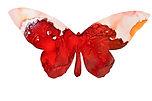 CrimsonButterfly.jpeg