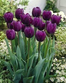 Tulip/Plant Scavenger Hunt