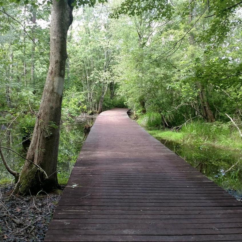 A bridge over the swamp