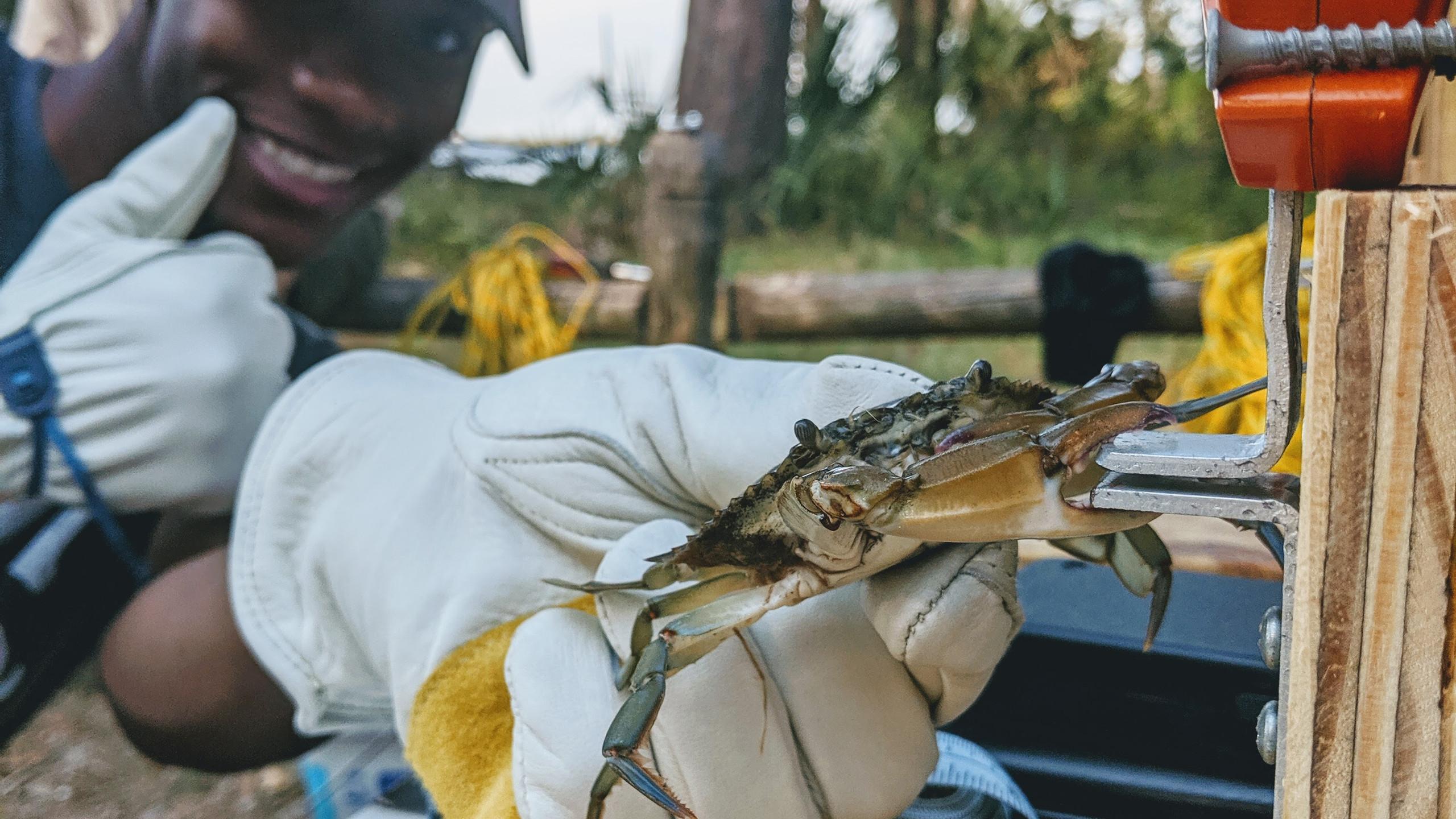 Crab pinch force