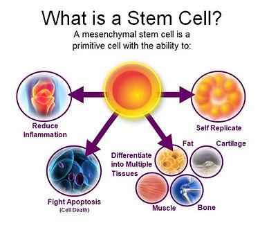 Stem Cell MSC pic.jpg