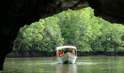 Mangrove River Tour Toro Waterports