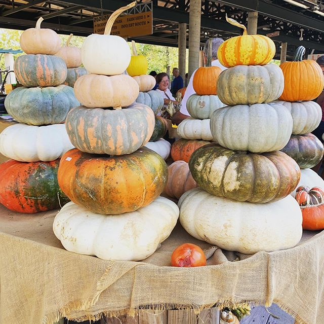 ✨#fall #squadgourds