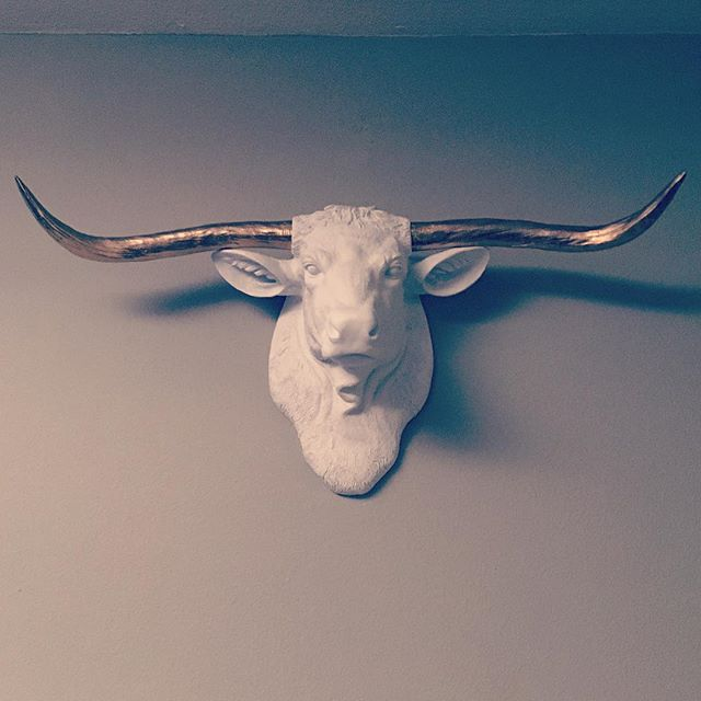 Longhorn #airbnb #dallas