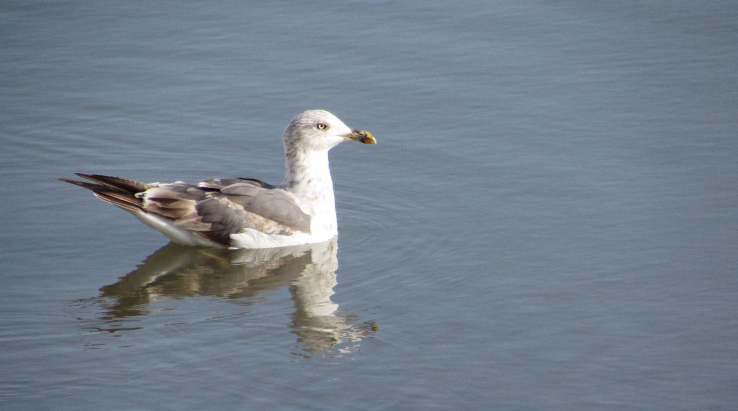 Aves, Salinas do Grelha, Algarve - Olhão, Ria Formosa