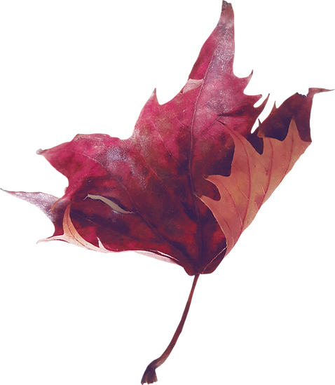 purple leaf.png