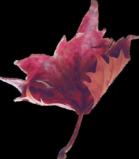 purple leaf.png