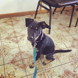 Eric - ADOPTED