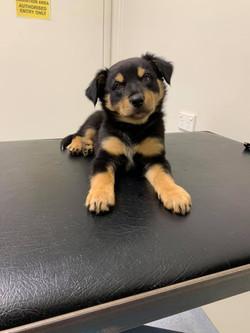 Doris - Adopted