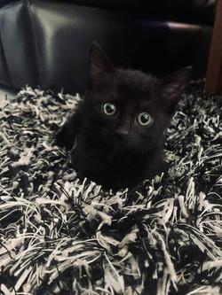 Valentine - Adopted