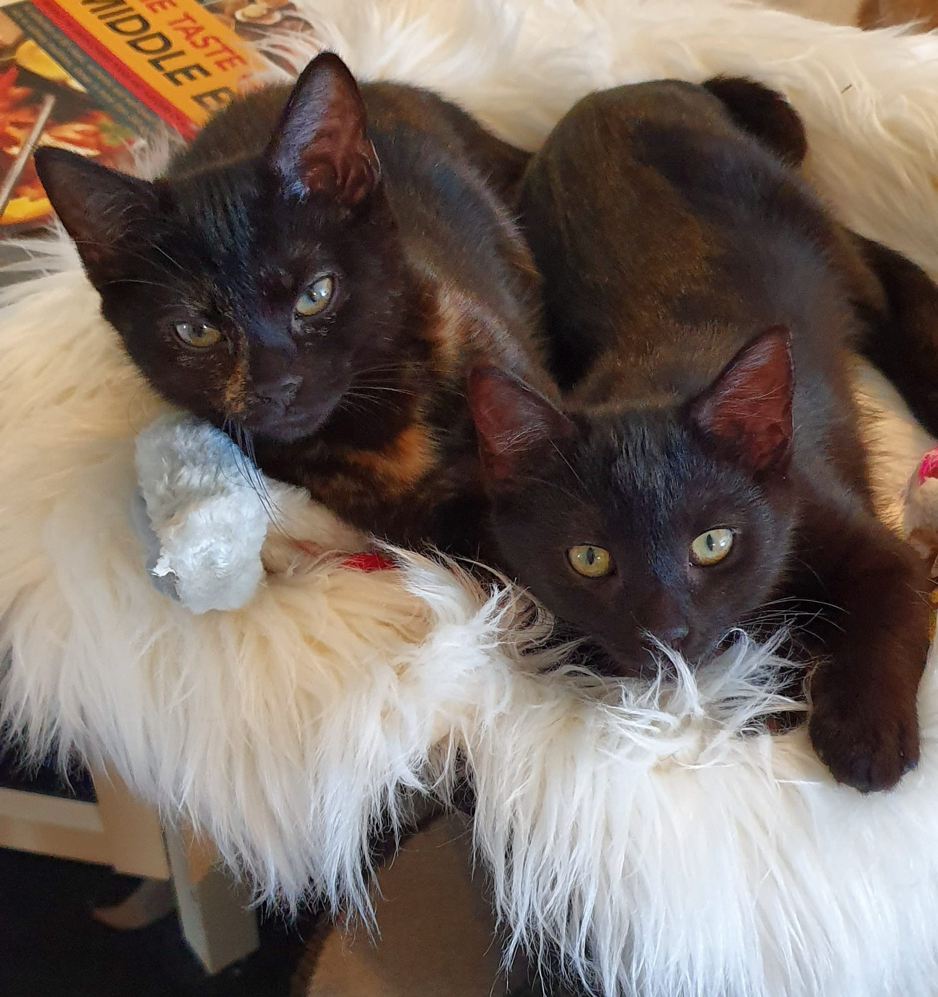 Chickie & Beanette - ADOPTED