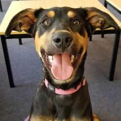 Claire - ADOPTED