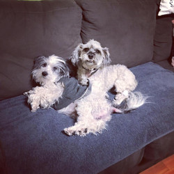 Dozer & Cedric - ADOPTED