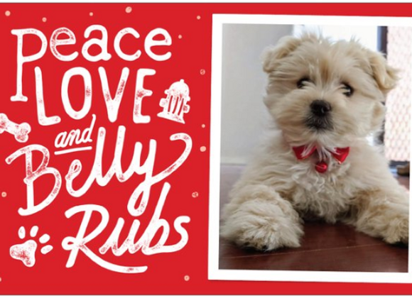 Bundle of 6  Peace Love and Belly Rub Xmas Cards