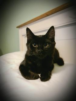 Eddy - Adopted