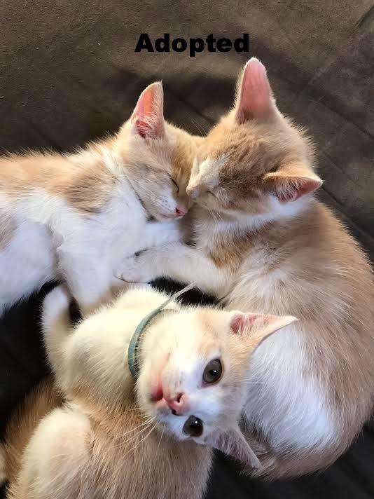 Itty Bitty 4Lyfe kitties