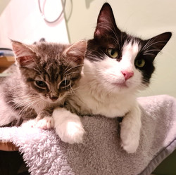Shrimpy and Anemone -ADOPTED