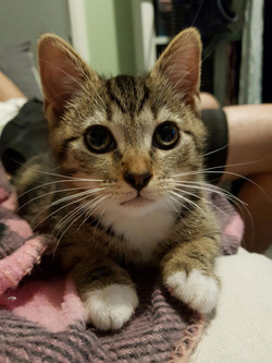 Alvin  - ADOPTED
