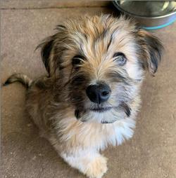 Cheddar - Adopted