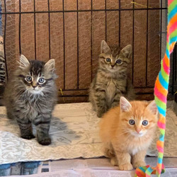 Hogwarts Kittens - Adopted