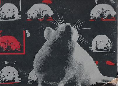 RAT back LOW.jpg