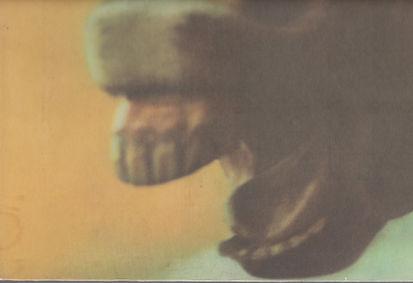 HORSE LOW (2).jpg