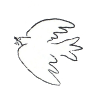 bird trans background.png