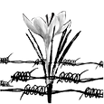 tfsw flower and barbed wire v2.png