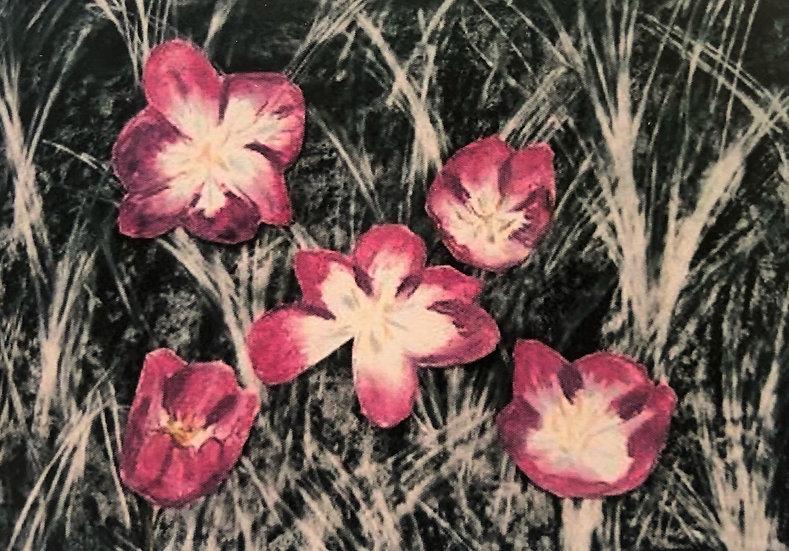 5 Flowers blank cards - Pk 6