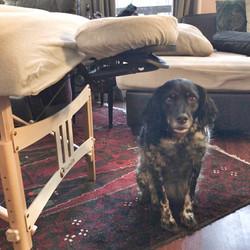 Dog Next to Massage Table