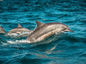 Mon animal totem : Le dauphin
