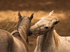 Mon animal totem :  Le cheval