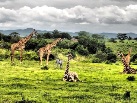 Mon animal totem :  La girafe