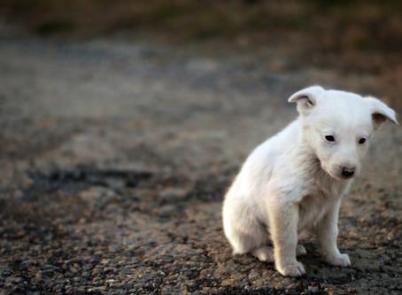 Mon animal est déprimé !