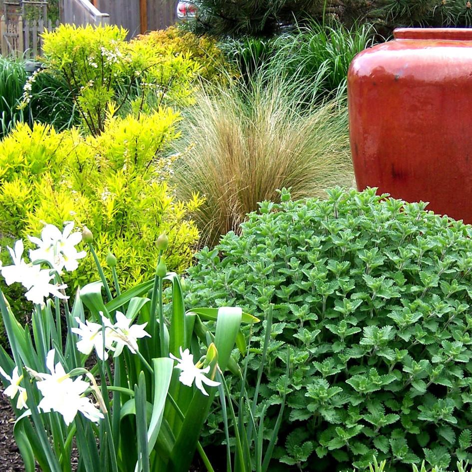 Website Update Flower Beds 20.jpg