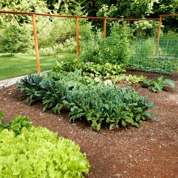 Website Update Edible Gardens 11.jpg