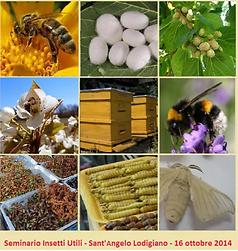 insetti utili.PNG