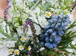 Wild flowers (blue)