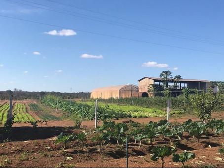 Assentamentos de Londrina se transformam em exemplo de agronegócio