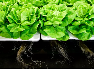 Hydroponics is the next wave in food production (letter to the Financial Times, 7 Feb 2018)