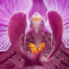 200pcs/Bag Phalaenopsis Orchid Seeds -US$2.87