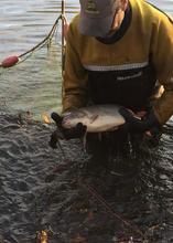 Fish health check