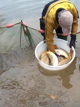 Fish Health Check - Bottom Lake